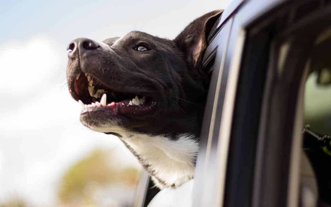 7 Tips for Driving With Your Dog